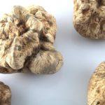 White truffles