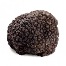 Fresh Burgundy Black Truffle