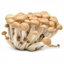 Chiodini Brown Shimeji Mushrooms