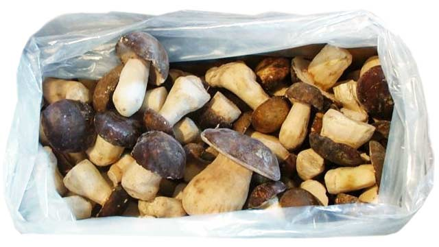 Porcini mushrooms price